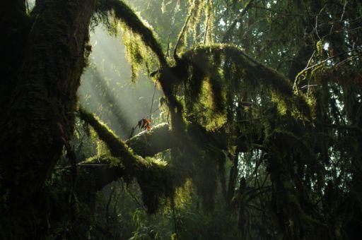 Mossy forest near Pokhara.