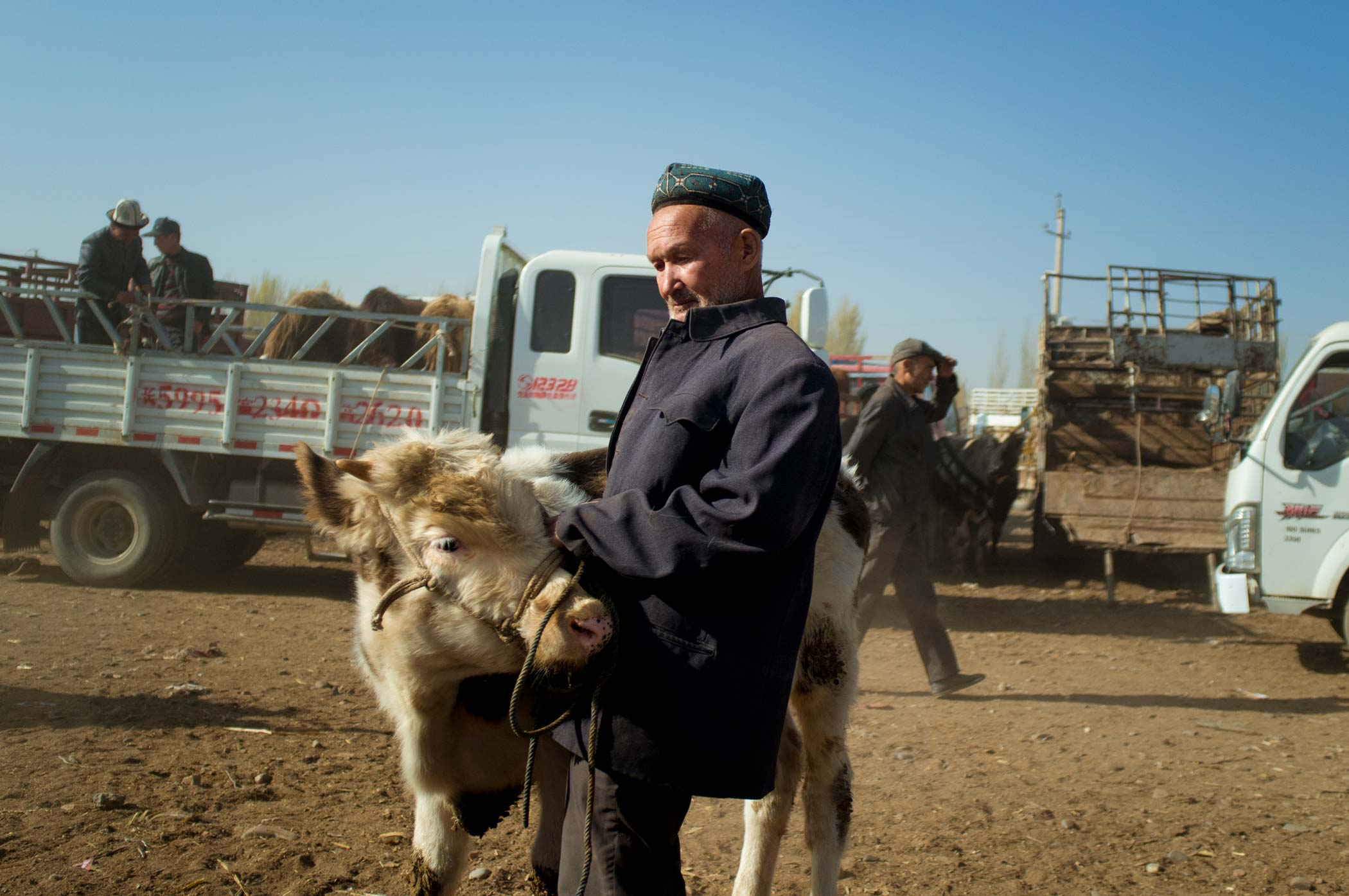 A man stands with a cow at a livestock market in Kashgar, Xinjiang.