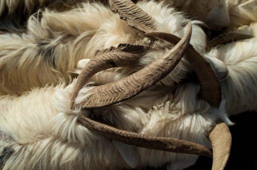 Goats locking horns in Kashgar, Xinjiang