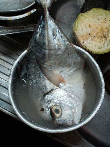 A pompano fish sits in a pan of water at the Galeria Pueblo Nuevo market in Buenaventura